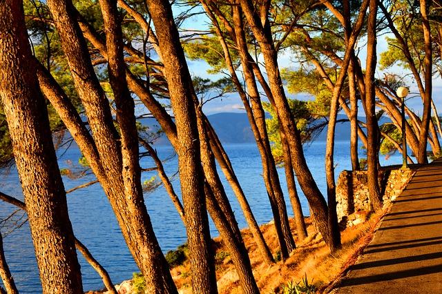 stromy na pobřeží
